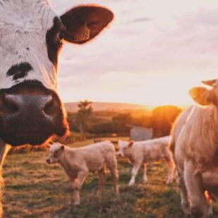 Spożycie mięsa a stan zdrowia i środowiska